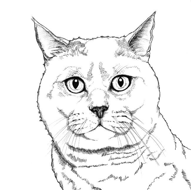 650x648 British Shorthair Cat