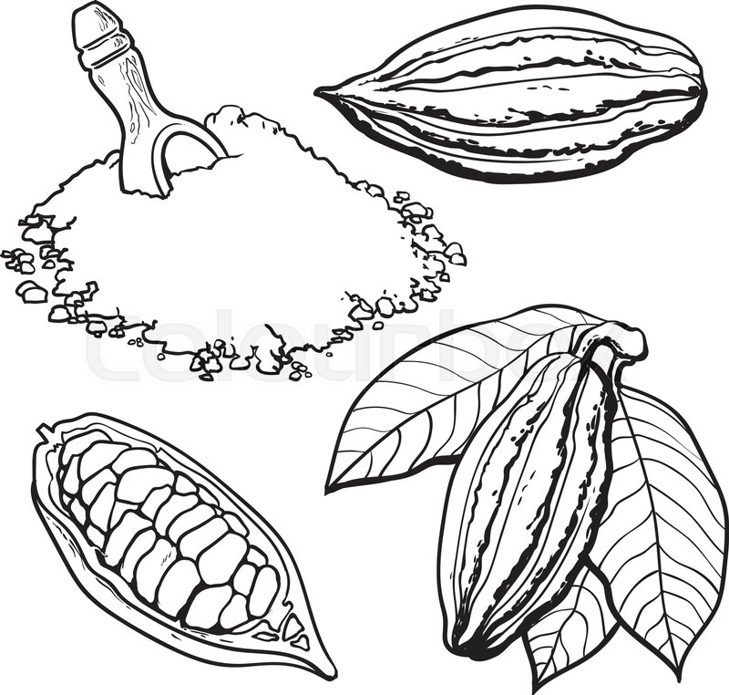 800x762 Cacao Fruit, Beans And Powder, Set Of Style Vector Illustrations