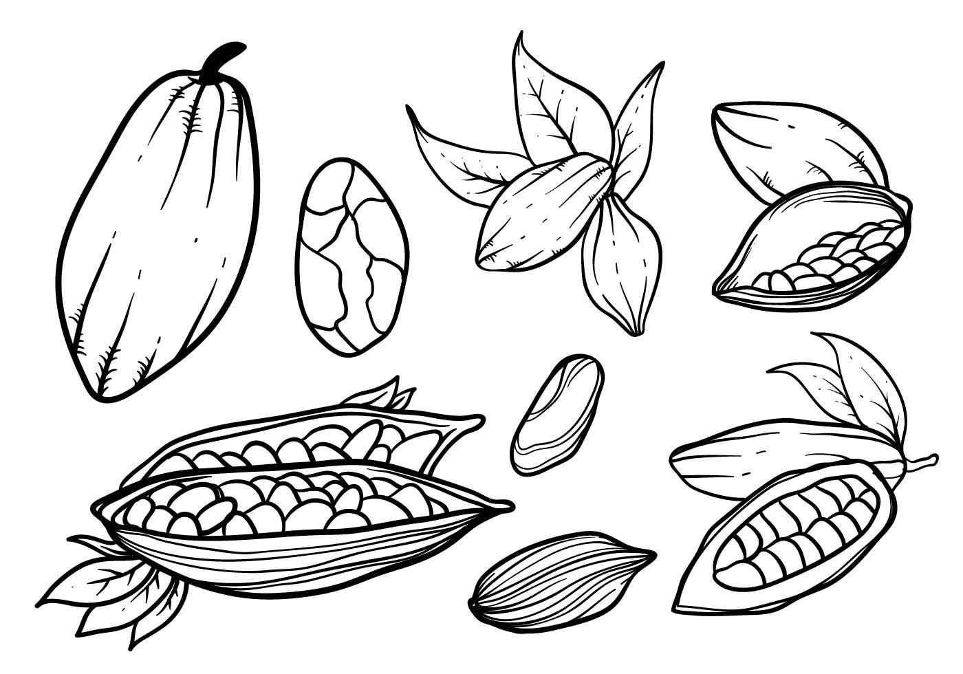 1400x980 Hand Drawn Cocoa Beans Vector