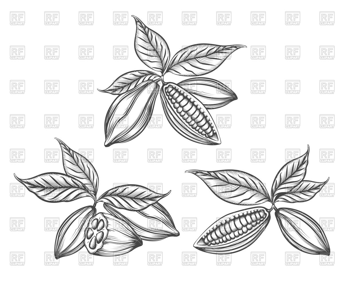 1200x982 Hand Drawn Cacao Beans Vector Image Vector Artwork Of Signs