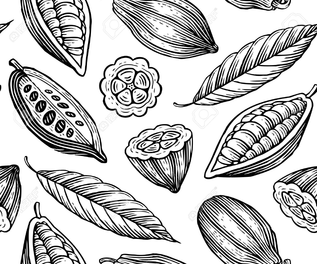 1300x1082 Collection Of Cocoa Fruit Drawing High Quality, Free