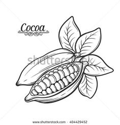 236x246 Cocao Bean Drawings Clip Art Food 2 Beans, Cacao
