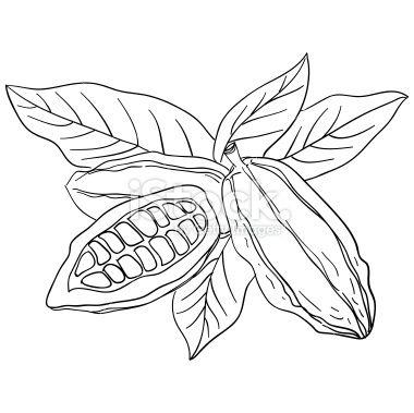 380x379 Contentuploads201410cocoa Bean