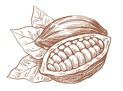 500x372 Cacao En El Mundo Camcafe