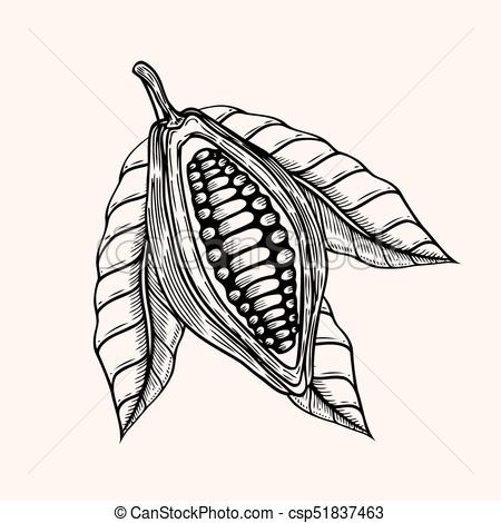 450x470 Cocoa Beans Illustration. Engraved Style Illustration. Chocolate