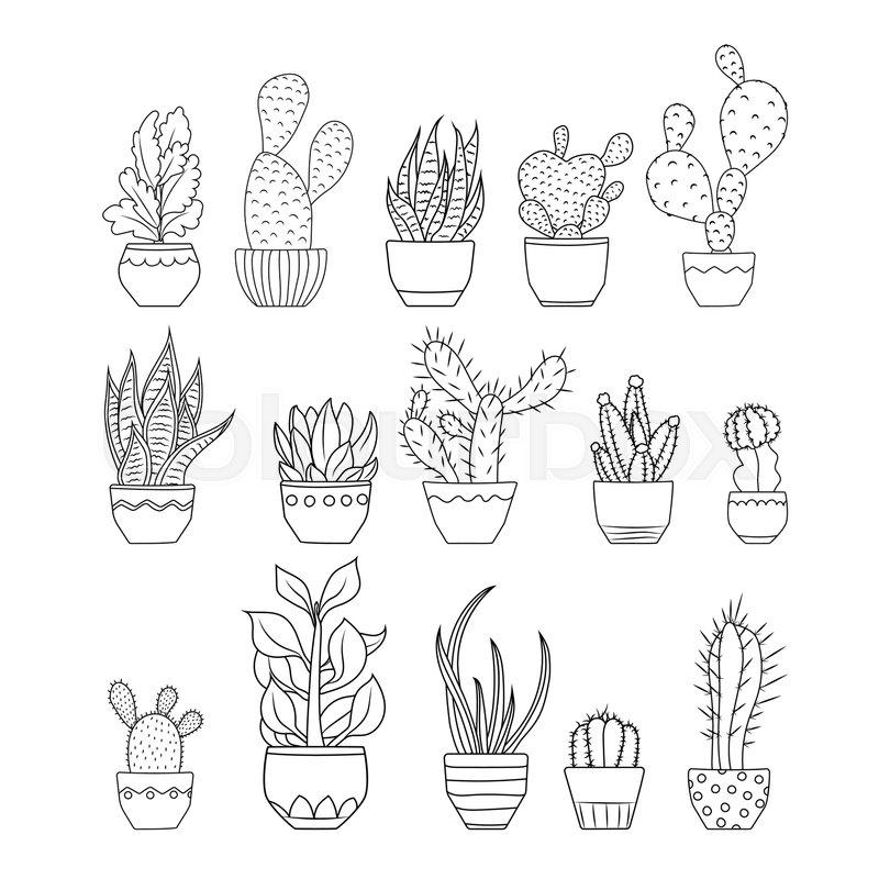 800x800 Various Exotic Cactus Succulent Flowers Species Planted In Pots