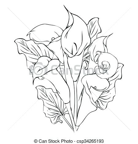 450x470 Lily Flower Outline Calla Lily Flowers Vector Lily Flower Outline