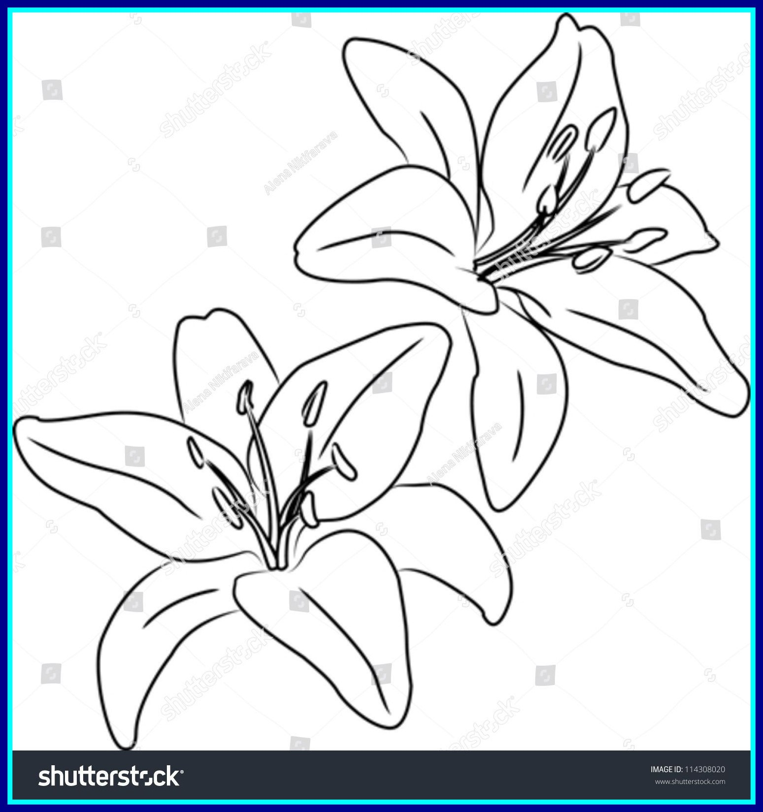 1550x1650 Shocking Two Blooming Asiatic Lilies Vector Sketch Outline