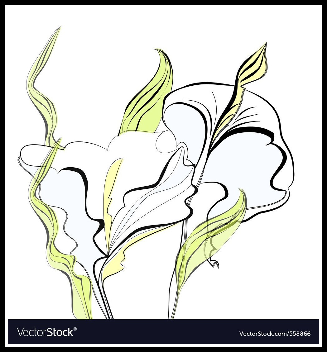 Calla Lily Drawing Outline At Getdrawings Free For Personal