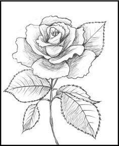 236x290 Calla Lily Coloring Page From Lilies Category. Select From 20946