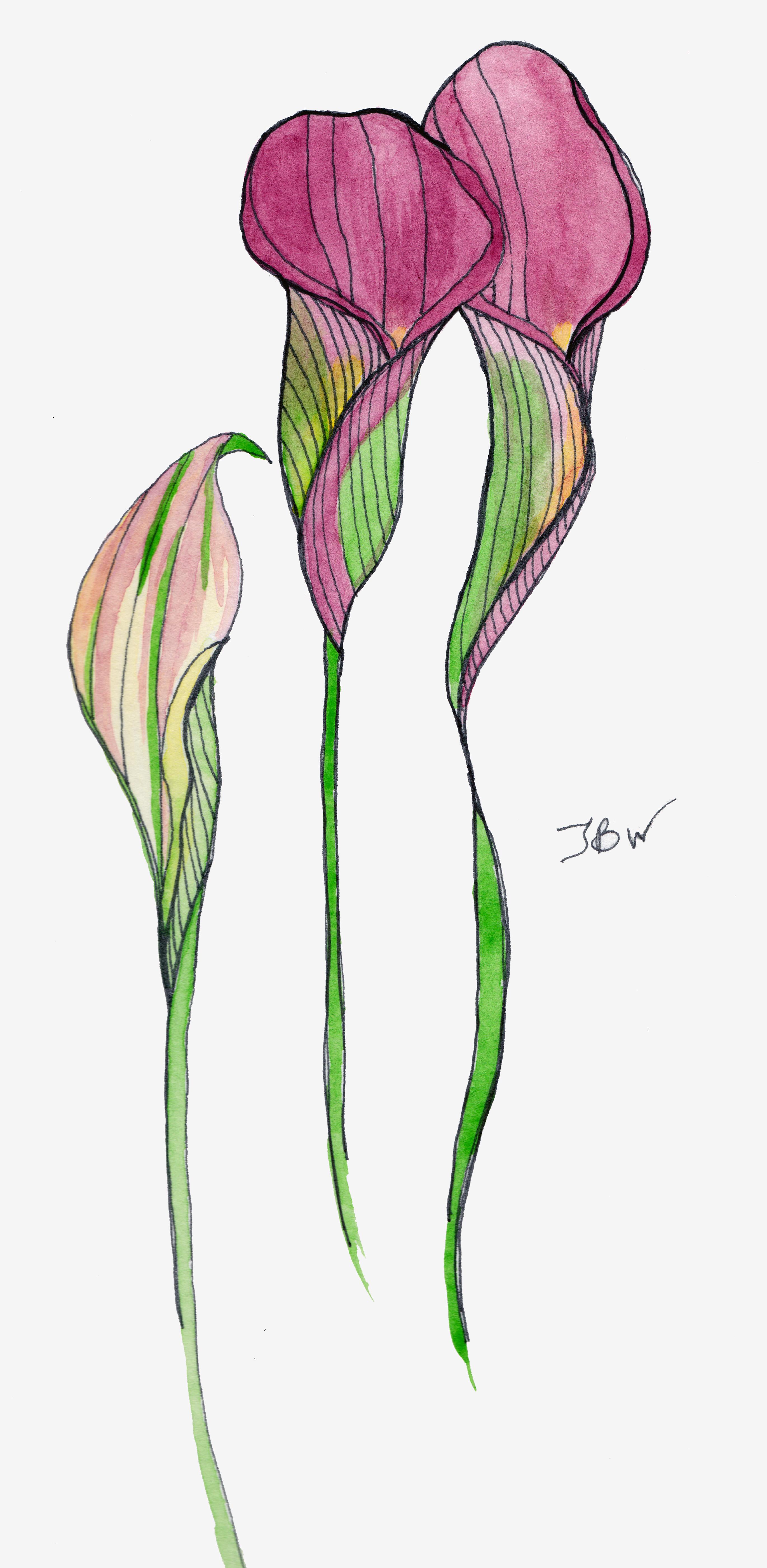 2741x5606 Calla Lily Drawing Pattern