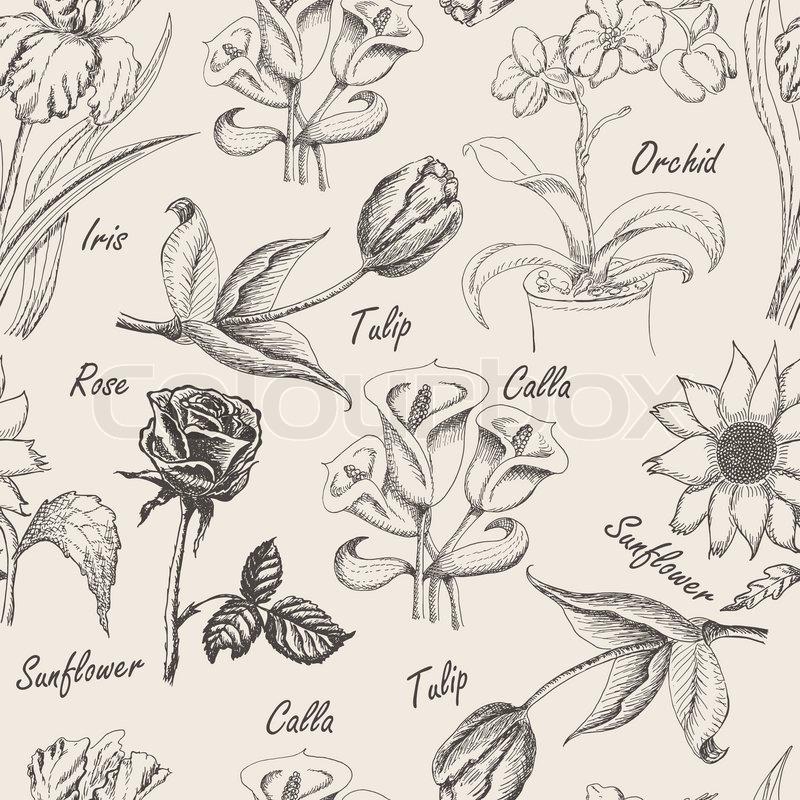 800x800 Hand Drawing Seamless Patern Of Flowers. Iris, Calla Lily, Tulip