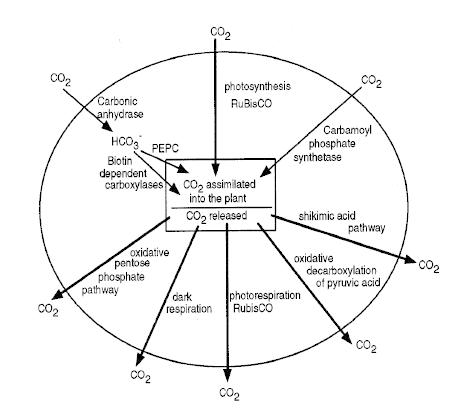 Carbon Cycle Drawing At Getdrawings Com