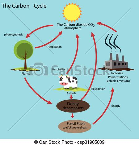 Carbon cycle drawing at getdrawings free for personal use 450x470 28 collection of carbon cycle drawing high quality free ccuart Gallery