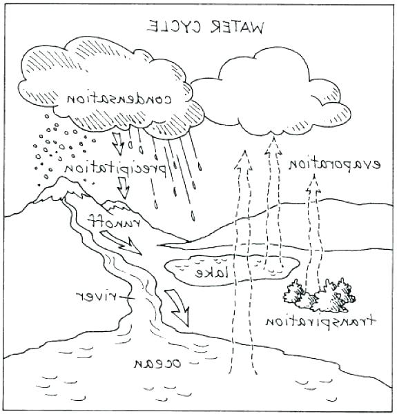 575x600 Carbon Cycle Coloring Page Cycle Coloring Page Water Cycle