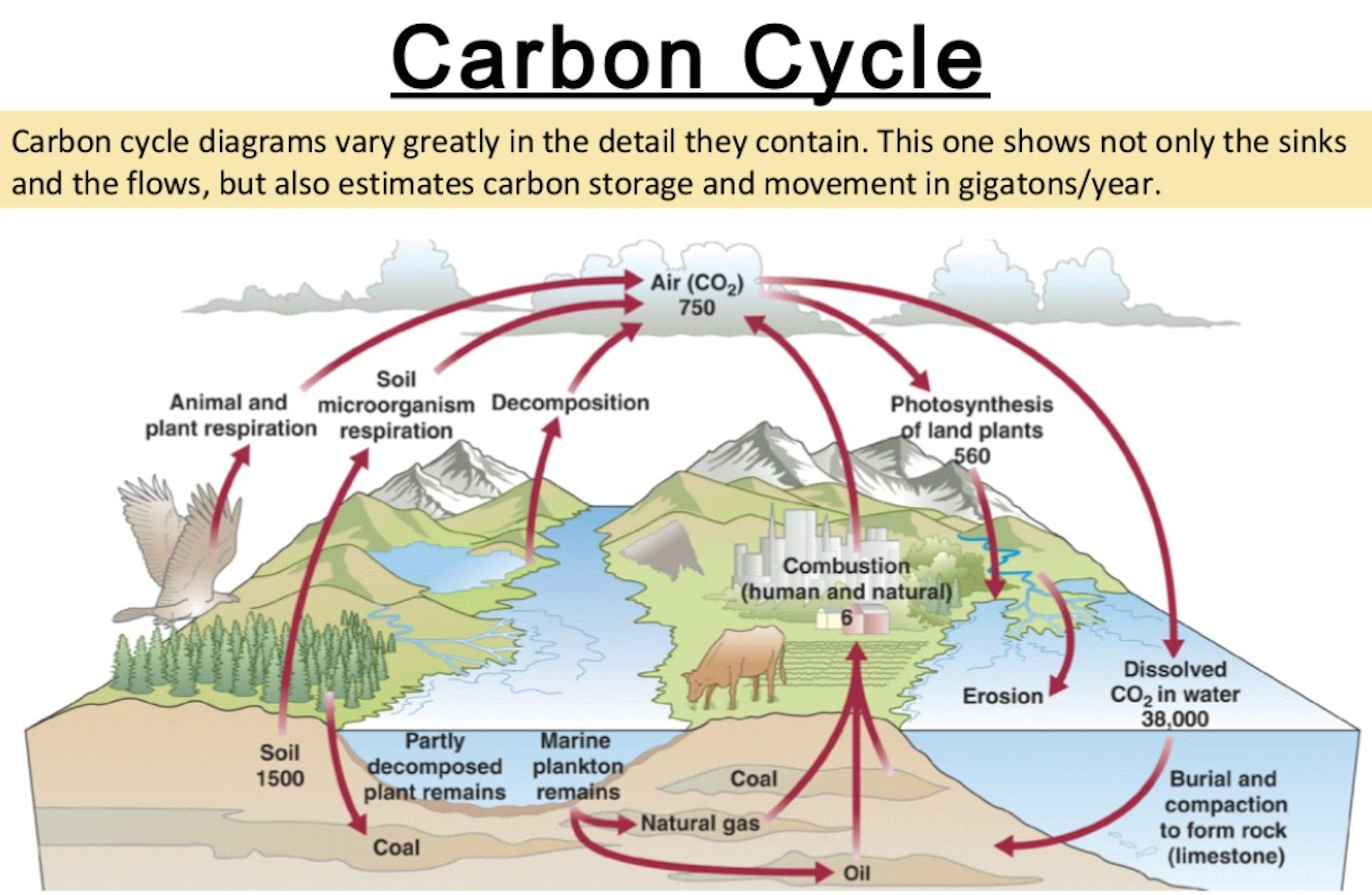 2268x1479 Worksheet. Carbon Cycle Worksheet. Carlos Lomas Worksheet For Everyone