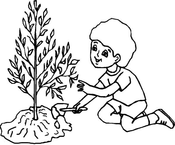 600x498 Boy Caring For Tree On Arbor Day Coloring Pages Best Place To Color