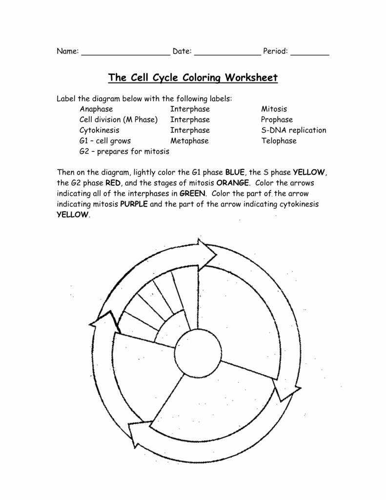 Cell Cycle Drawing at GetDrawings   Free download