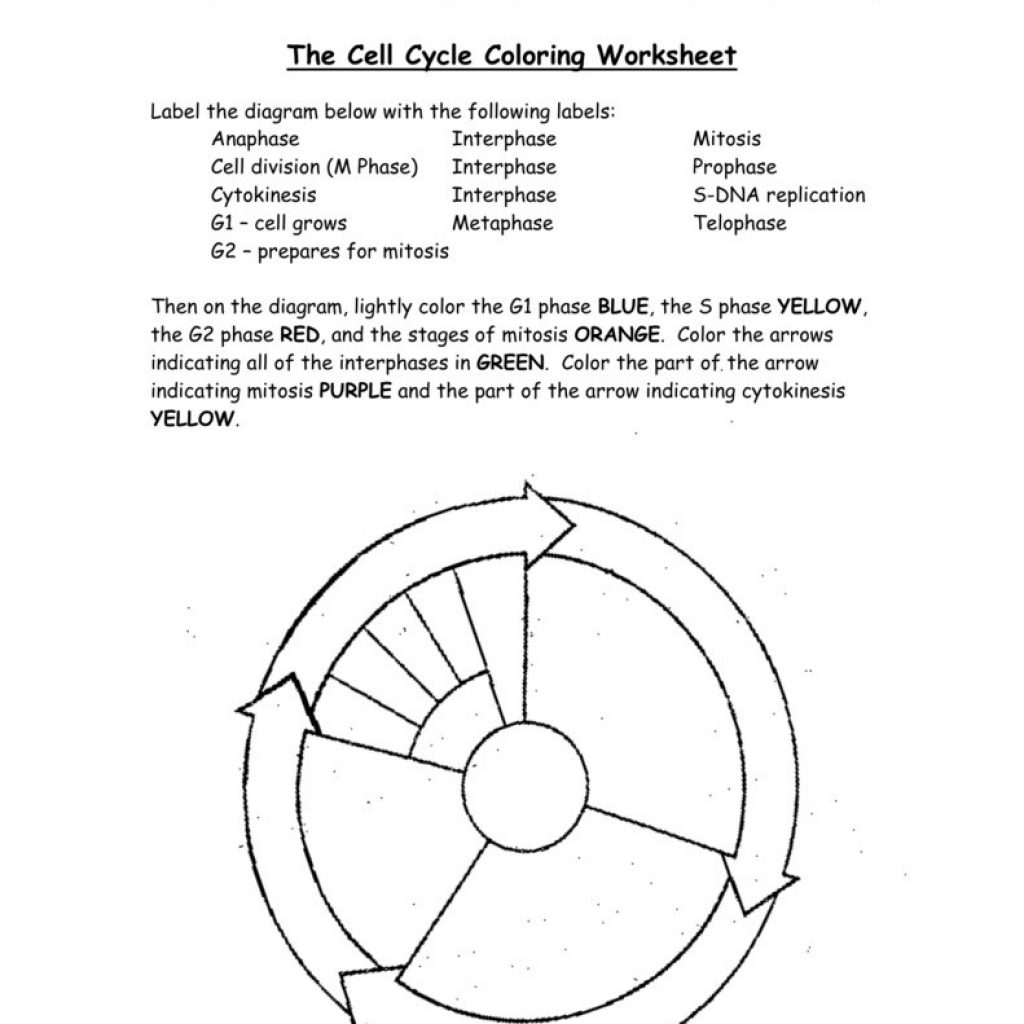Cell Cycle Drawing Worksheet At Getdrawings