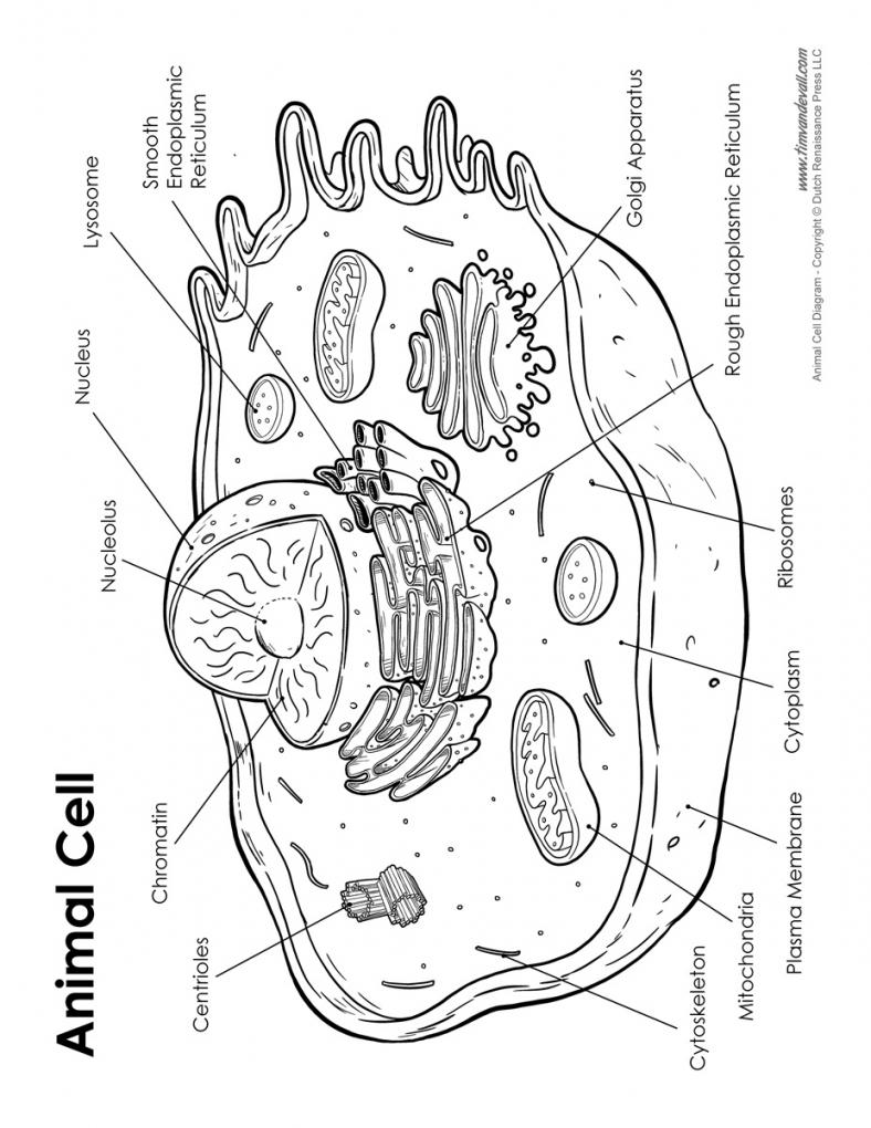 788x1020 Worksheet Cell Labeling Worksheet Idea Of Animal Cell Diagram