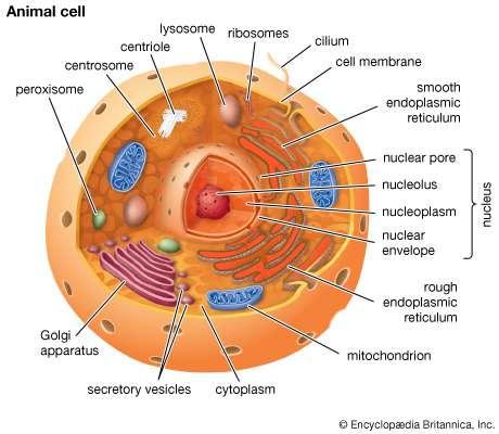 460x400 Cell Membrane Biology