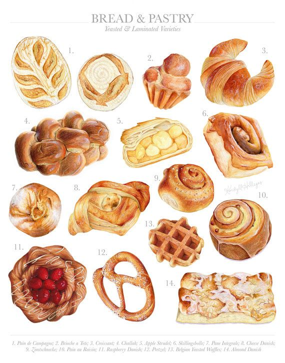 570x726 Bread Amp Pastry Varieties Limited Edition Food Illustration