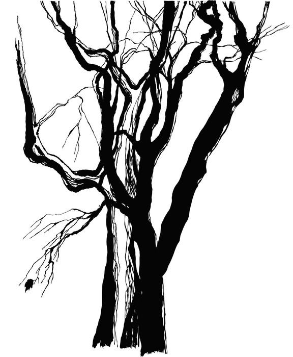576x700 Old Trees Drawing Graphic Sketch Wall Mural We Live