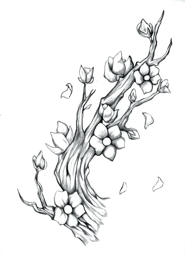 600x826 Cherry Blossom Tree Drawing Cherry Blossom Branch By On Cherry