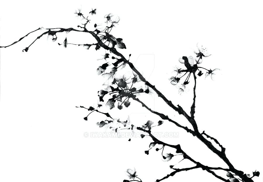 900x621 Cherry Blossoms Drawing Cherry Blossom Cherry Blossom Tree Drawing