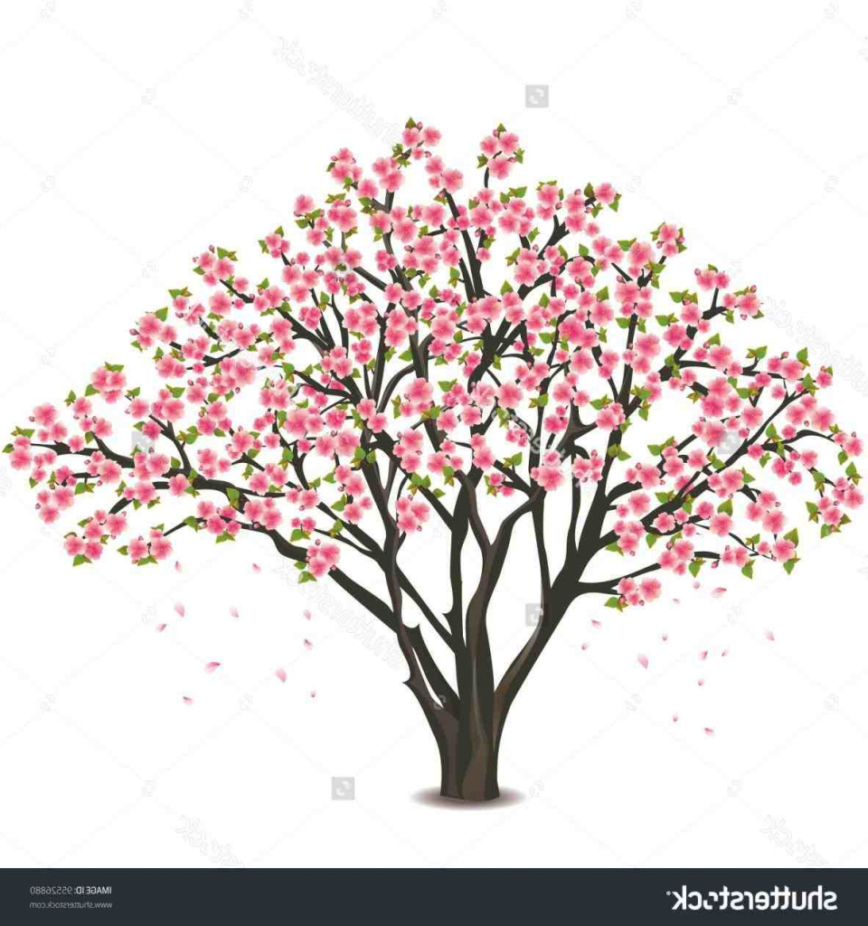 960x1024 Cherry Blossom Tree Drawing Outline Cherry Tree Drawing Cherry
