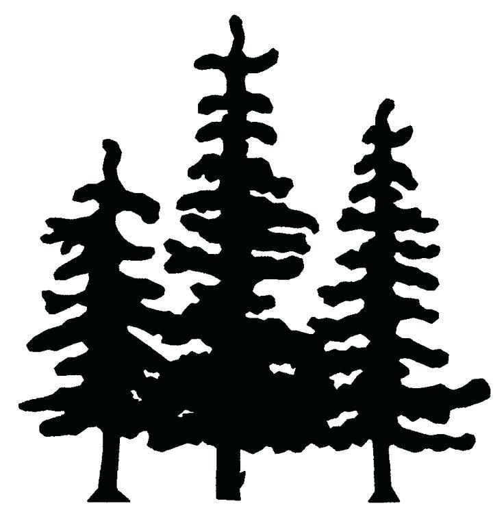 736x745 Pine Tree Drawings How To Draw A Tree Pine Tree Drawings Easy