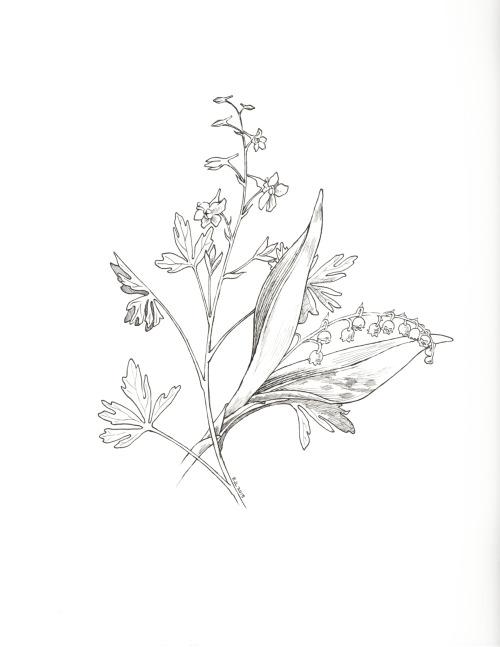 500x647 Birth Month Flower Tumblr