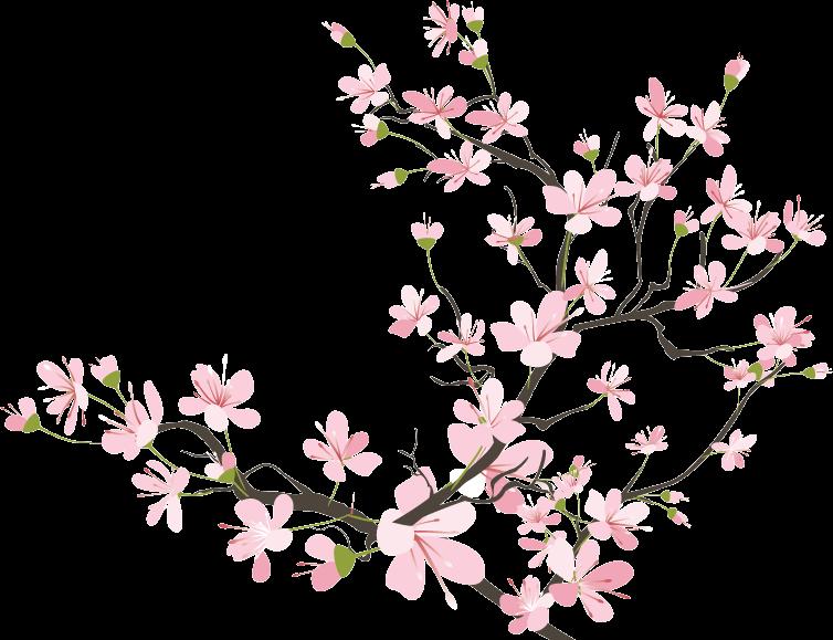 754x579 Flowers Cherryblossom Sakura Kawaii Tumblr Ftestickers