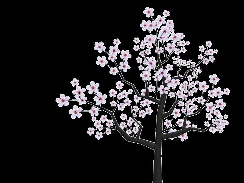 800x600 Tree Cherryblossom Sakura Kawaii Tumblr Ftestickers
