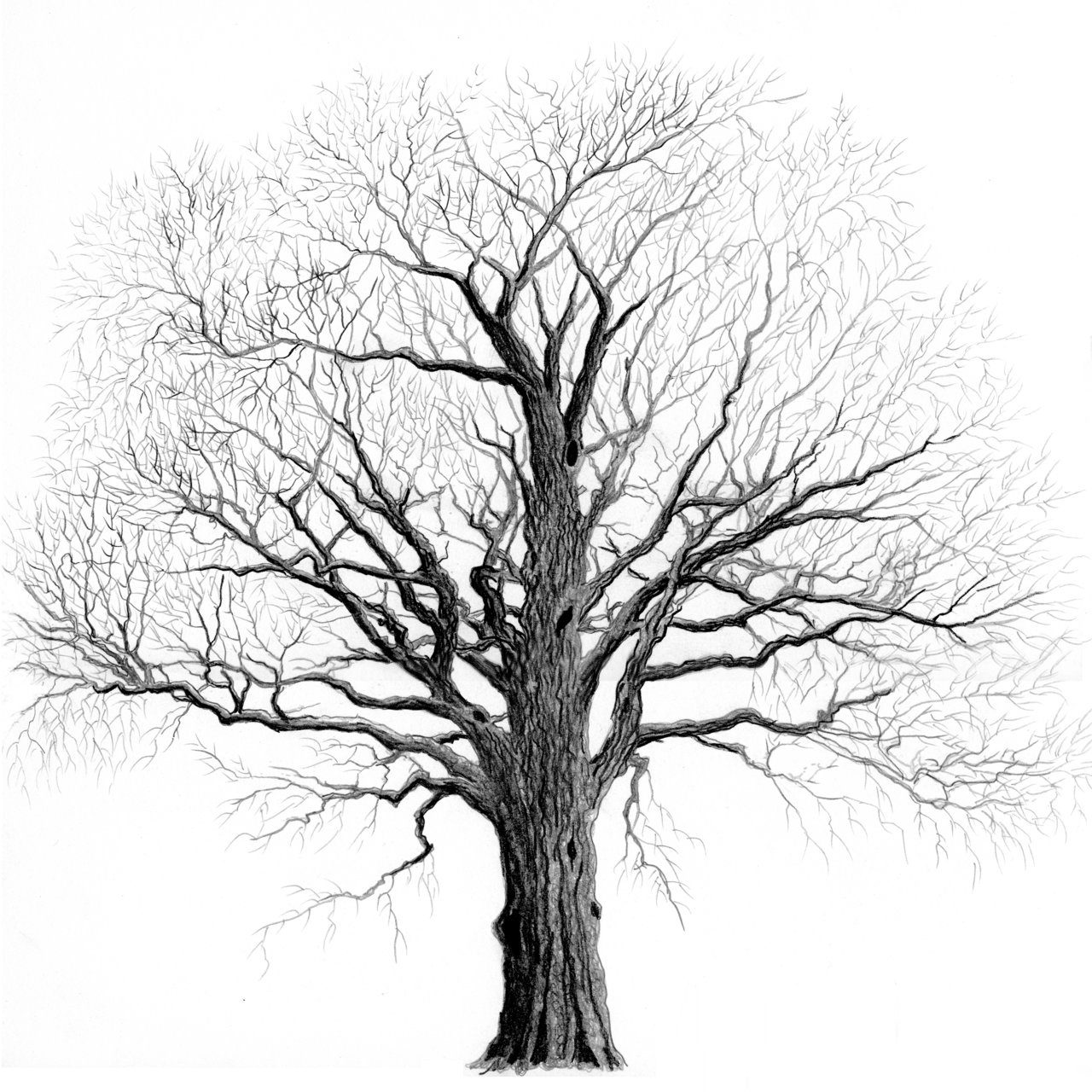 1280x1280 Collection Of Tree Tumblr Drawing High Quality, Free