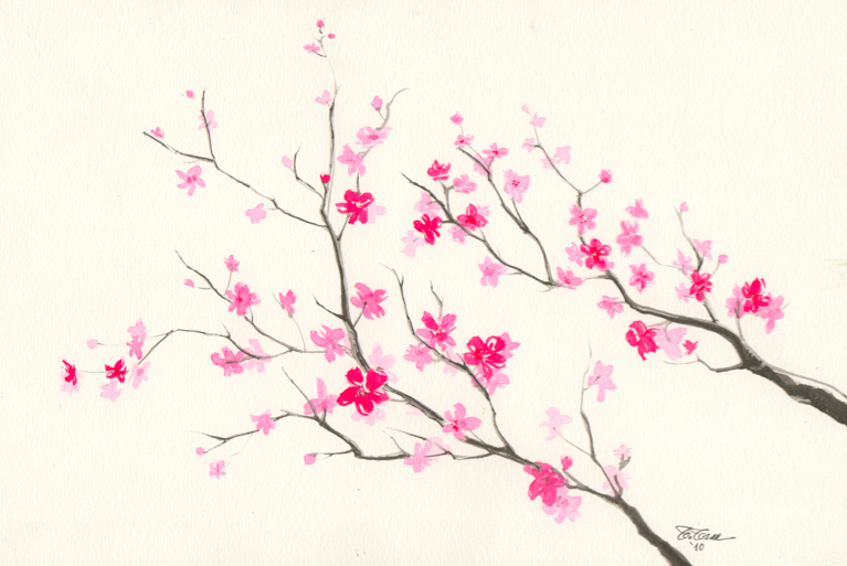 767x513 Collection Of Cherry Blossom Ink Drawing High Quality, Free