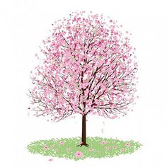 236x236 Cherry Blossom Tree Drawing Cherry Blossoms