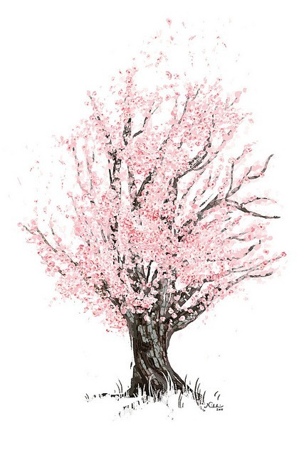 427x640 Cherry Blossom Tree Via Tumblr On We Heart It