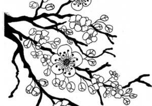 300x210 Drawings Drawing Ideas Sakura Tree Drawing Lovely Chinese Cherry