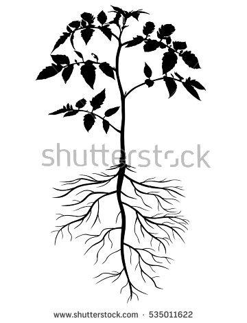 360x470 Drawn Plant Flowering Tree