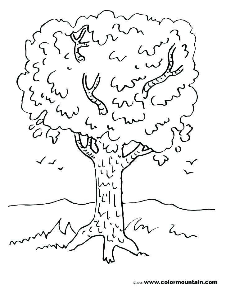 728x928 Coloring Pages ~ Tree With Roots Coloring Page Choice Image Pages