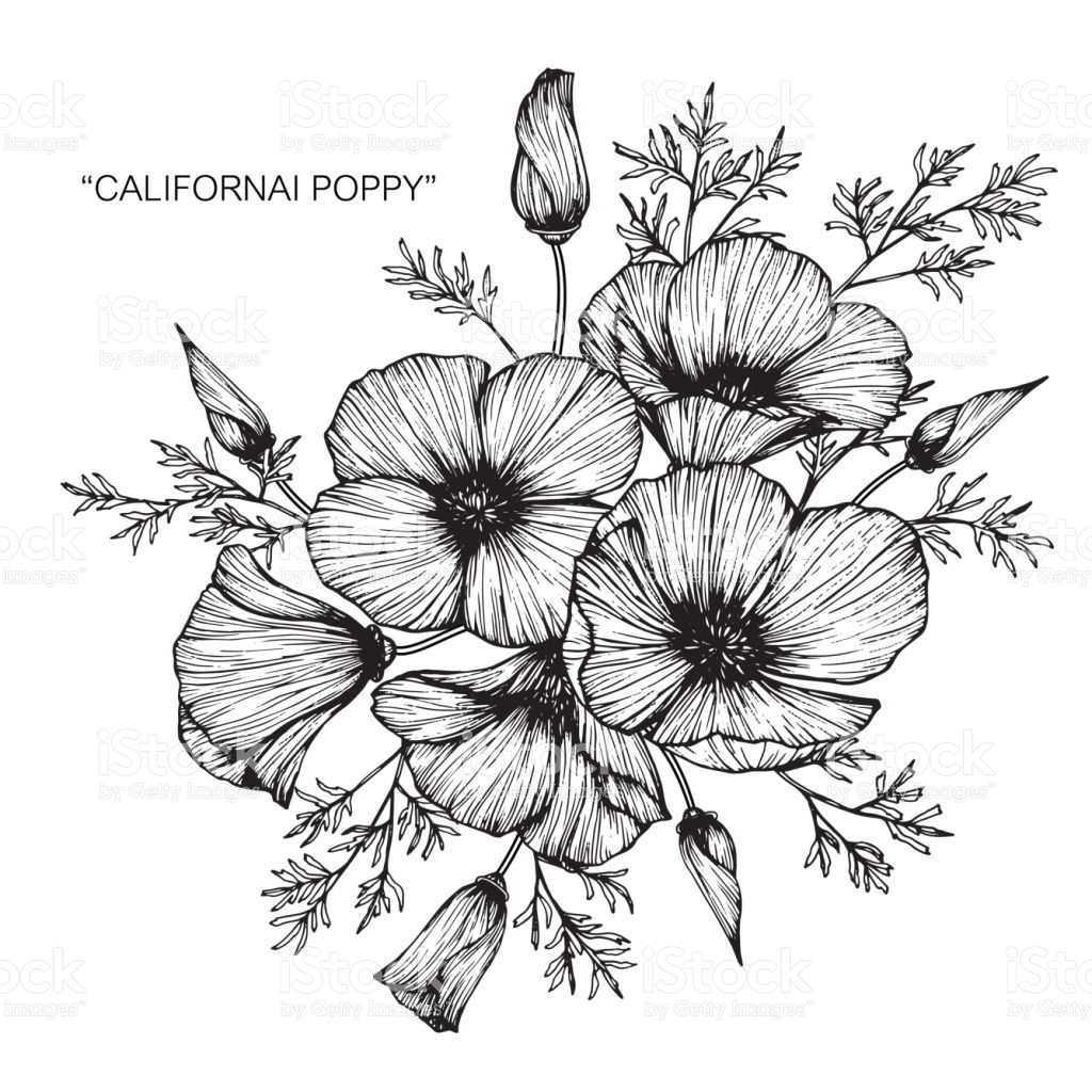 1024x1024 Black And White Flower Drawing Choice Image