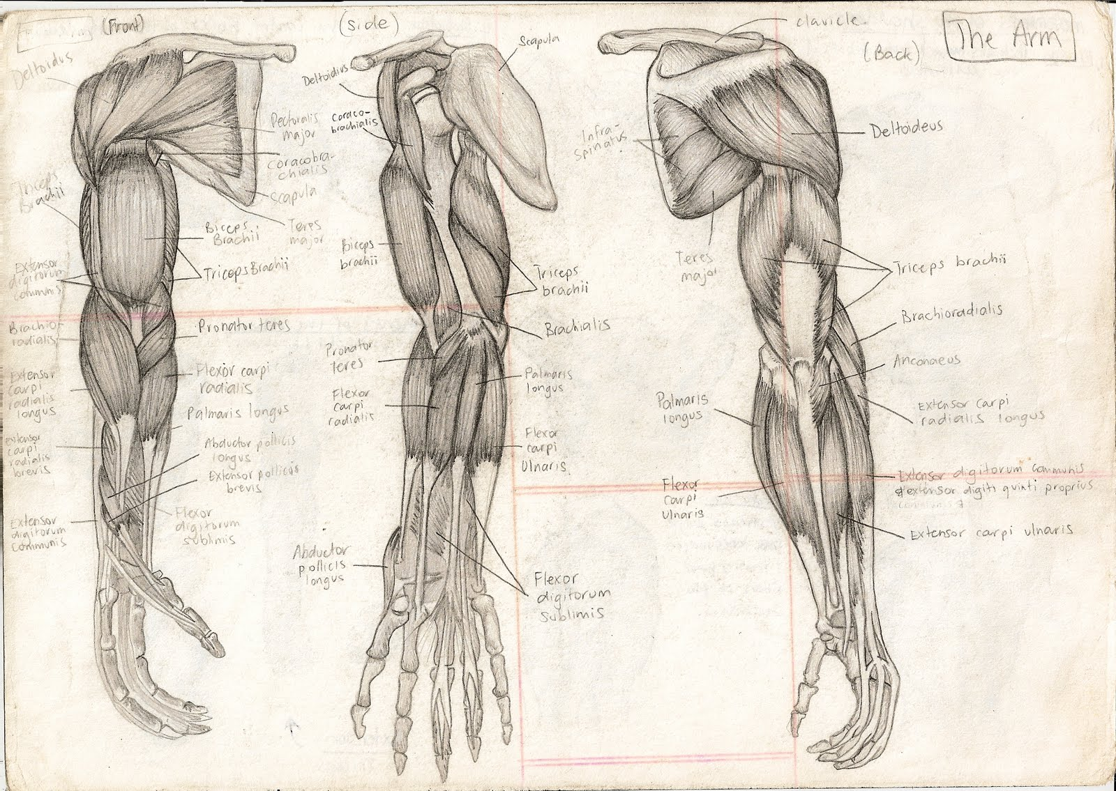 1600x1135 Human Anatomy Diagram. Human Anatomy Drawings Looks Through Human