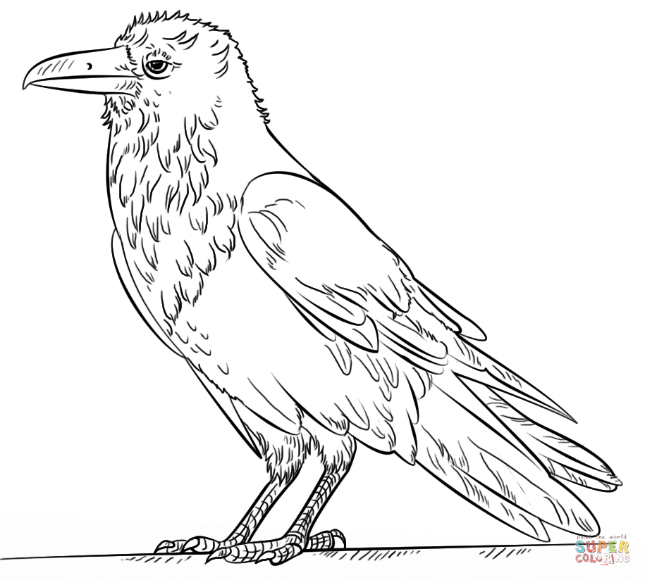 Common Drawing