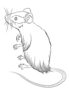 236x316 Pin By Ellen Bounds On Sketches Of Dormice