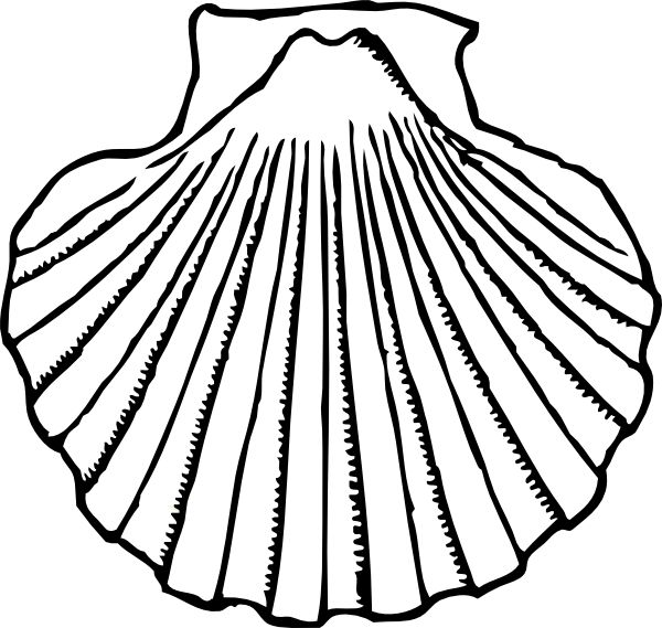 Conch Shell Line Drawing