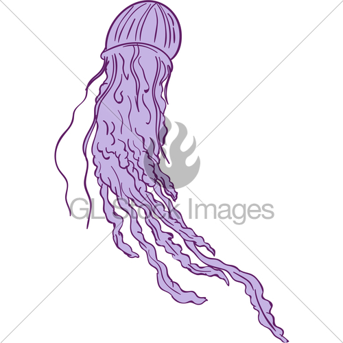 500x500 Australian Box Jellyfish Drawing Gl Stock Images