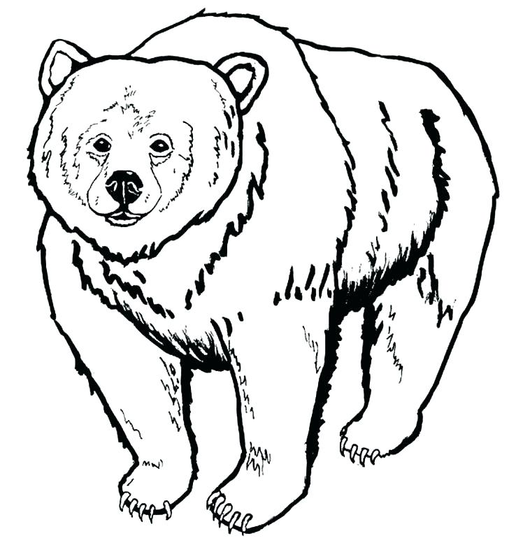 728x777 Bear Drawing Art And Draw Black Outline Within Coloring Pages