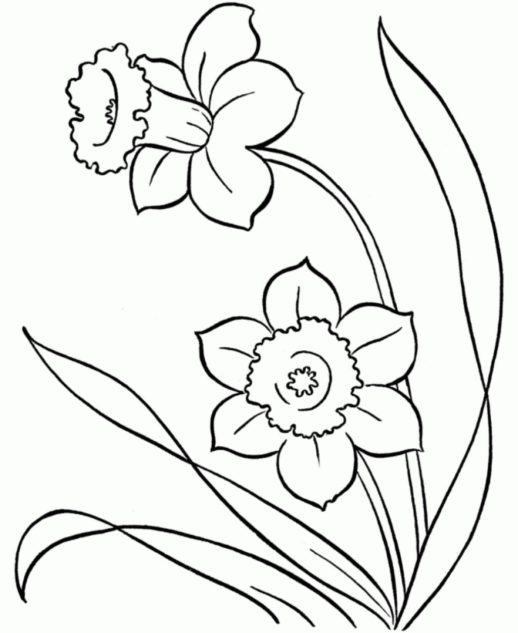 1025x1254 Cool Snowdrop Coloring Pages Line Drawings Of Snowdrops Google