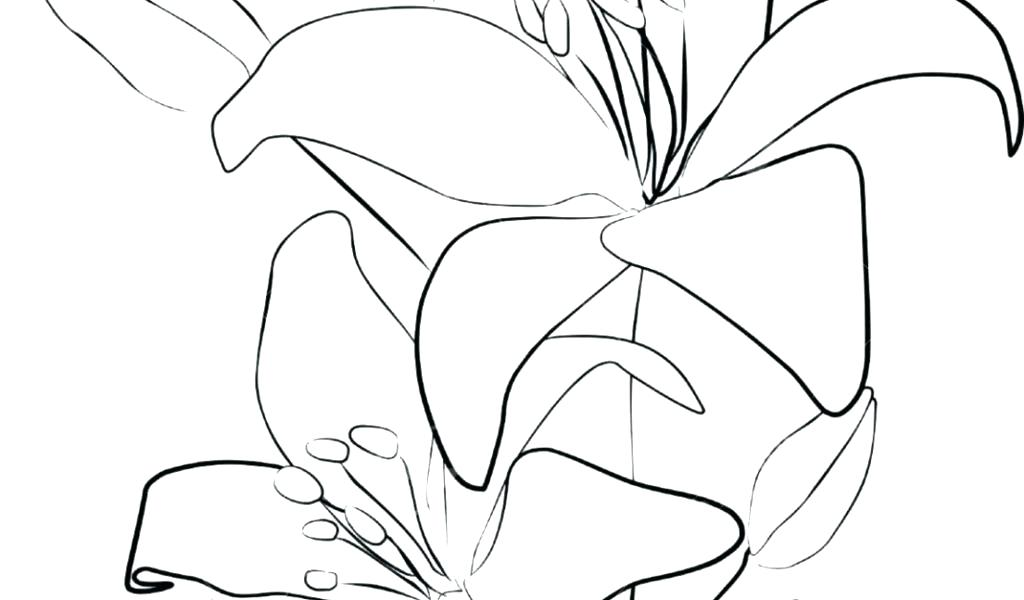 1024x600 Flower Drawing Outline Flower Drawing Outline Cool Flower Drawing